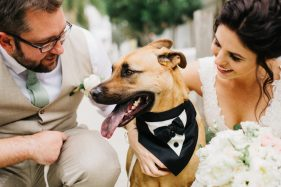 Cutest dog ringbearer photos