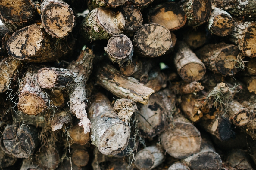 rustic chopped wood pile